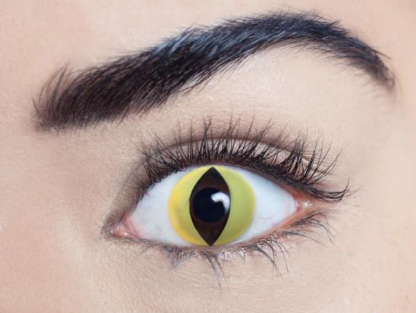 MesmerEyez - Wild cat  (Cat eye) | ročné
